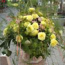 Rosen im Kübel