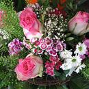 Rosengesteck pink