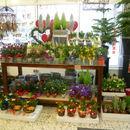 versch. Blumengestecke