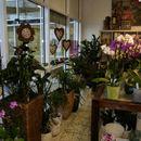 Pflanzen + Orchideen