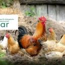 BioAgrar - Messe für ökologische Landwirtschaft