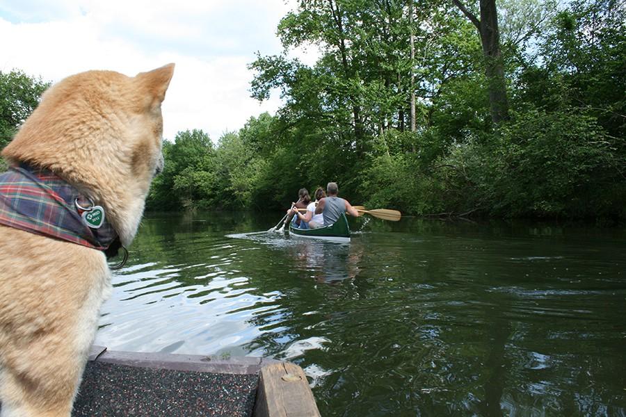 Taubergießen Bootsfahrten