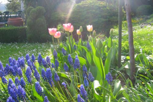 Blumenversand auch online