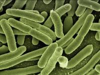 Neues zur Trinkwasseruntersuchung auf Legionellen!