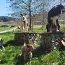 WanderTour mit großen und kleinen Hunden