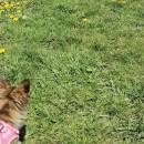 Zwergenwanderung - Wanderung mit kleinen Hunden