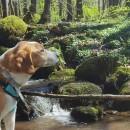 Ruhe Tour / Waldbaden light mit Hund