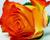 Rosen und Pflanzen aus der Wetterau!!