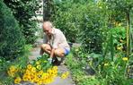 Terrasse und Gartenpflege, Gärtnerei und Baumschule.