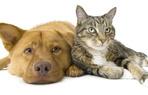Haustiere und vieles mehr....
